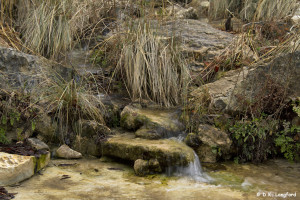 Winter Drought on Hillingdon Ranch - a spring flows strong
