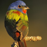 Summer on Hillingdon Ranch - painted bunting