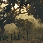 Summer on the Hillingdon Ranch - sunrise through the fog