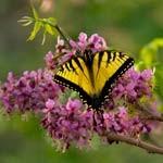 Spring on Hillingdon Ranch
