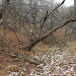 Winter Drought on Hillingdon Ranch - Loma Chiva Creek suffers in drought